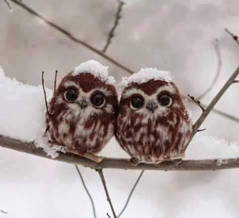 зима совы