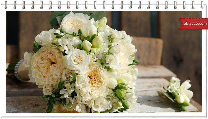 роза Дэвида Остина из ткани