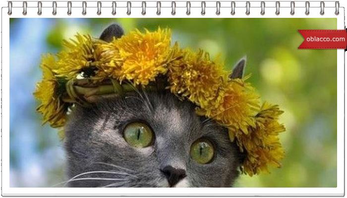 венок весна кошки одуванчики