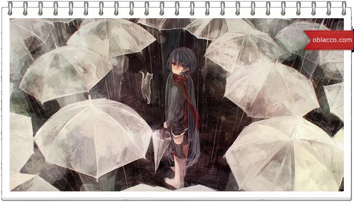 весна дождь кошка