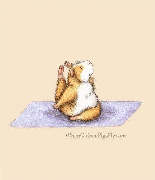 Йога у морских свинок