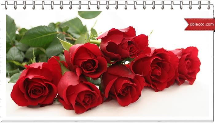 rosew